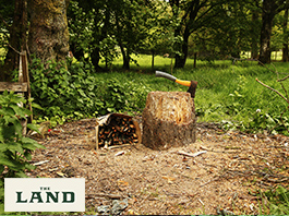 Coppicing Workshop: An Introduction to Woodland Management
