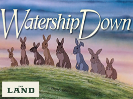Family Saturday: Watership Down